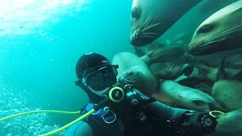 Dive With Dozens of Playful Sea Lions
