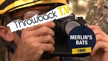 Throwback TV: Merlin's Bats