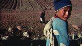 Peruvian Boy