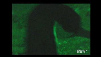 Cormorant's Deep Dive Caught on Camera