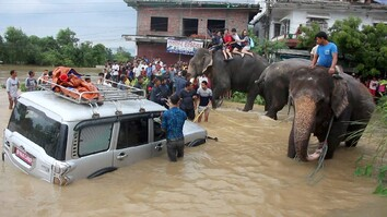 Elephants Rescue Hundreds From Floods