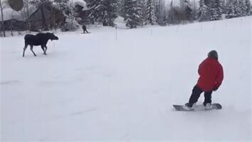 Moose Surprises Snowboarders With Mountainside Chase