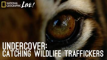 Undercover: Catching Wildlife Traffickers