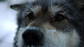 Life Below Zero: Sled Dogs