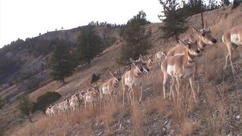 Wyoming's Incredible Animal Migrations Revealed as Never Before
