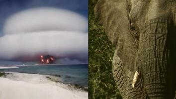How Nuclear Bombs are Helping Fight Elephant Poachers