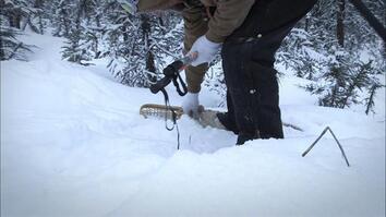 Snowshoe Greenhorn