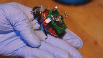 """BioBot"" Roaches Could Save Lives With Tiny Backpacks"