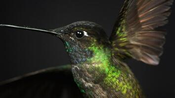 See How a Hummingbird Hovers in Amazing Detail