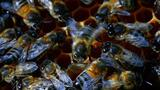 World's Weirdest: Honey Bee Dance Moves