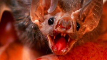 World's Weirdest: Vampire Bats