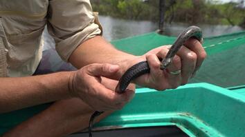 Why snakes are disappearing from Southeast Asia's largest lake