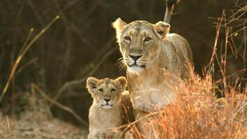 Asia's Last Lions
