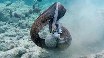 Eel vs. Octopus, Then Eel vs. Cameraman