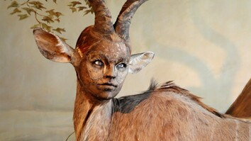 Human-Looking Faces on Animal Bodies: Taxidermy as Art