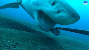Great White Shark Steals Camera, Goes on Wild Ride