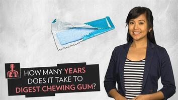 How Long Does It Take to Digest Chewing Gum?