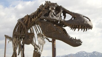 How a Giant <i>T. Rex</i> Packs for a Road Trip