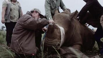 Is It OK to Trade in Rhino Horn?
