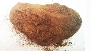 3,000-Year-Old Donkey Dung: A Clue to King Solomon's Mines?