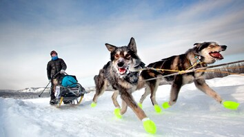 See How Dog Sledding Helped This Photographer Get Her Spark Back