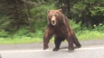 Watch: Bear Charges Car