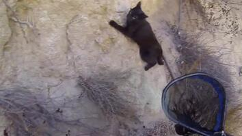Black Cat Saved in Cliffside Rescue
