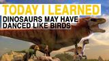 TIL: Dinosaurs May Have Danced Like Birds