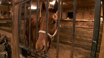 The Incredible Dr. Pol: A Plugged Up Racehorse