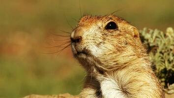 Prairie Dog Emergency Alert System