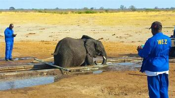 See How This Team Rescues a Drowning Elephant