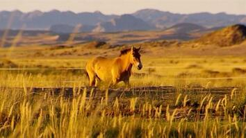 Flying Endangered Wild Horses From France to Mongolia