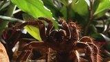 Tarantula Contact