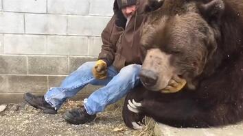 This Orphaned 1,500 Pound Kodiak Bear Is Sick—Needs Hugs