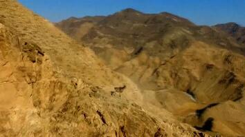 Watch Rare Wild Sheep Run Up Steep Mountainside With Ease