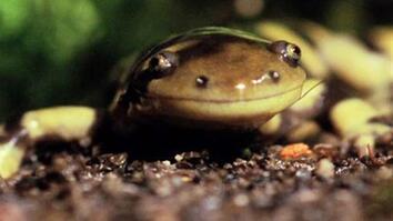 Salamander vs. Bugs