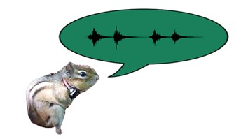 A Short Guide to Chipmunk Noises