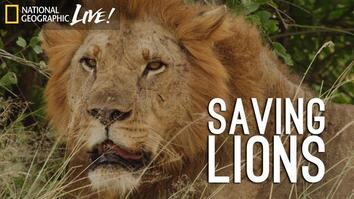 A Park Reborn: Saving Lions