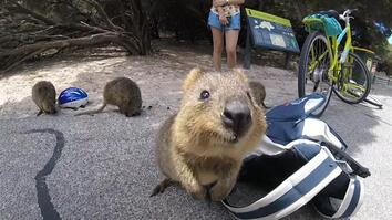 See How Selfies Saved This Cute Endangered Animal