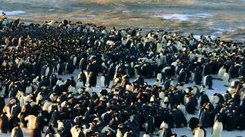 Penguins Do the Wave
