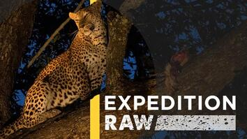 This Deadly-Looking Leopard Is Actually Fun to Photograph