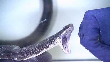 Watch Snakes Strike in Slow Motion