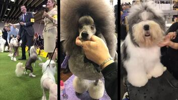 See Westminster Dog Show Contestants Get Pampered Behind the Scenes