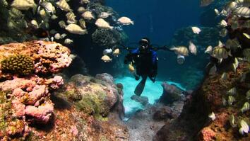 Pristine Seas Efforts Inspire Protection of Untouched Reefs