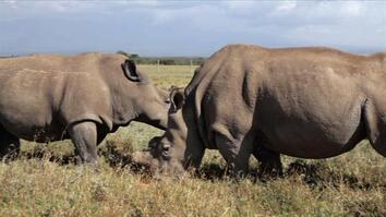 Fighting Rhino Poaching With Guns, Drones, and Dogs