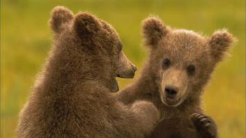 Grizz Quiz: How Much Do You Know About Grizzly Bears?