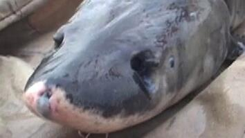 'Giant Fish' Faces Big Trouble in China