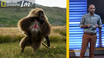 The Fascinating Lives of Bleeding Heart Monkeys (Part 2)