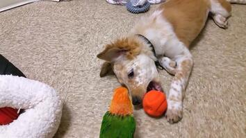 Top 3 Best Puppy Friends