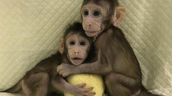 Meet the First Monkey Clones Of Their Kind